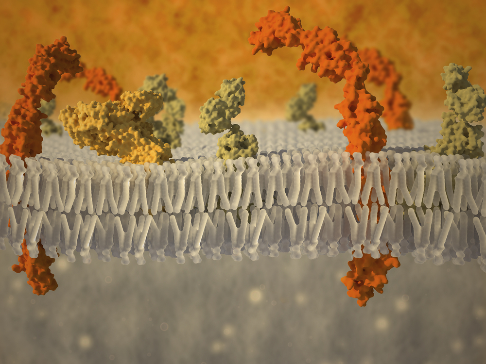 Novel Strategy To Target Lung Cancer Protein