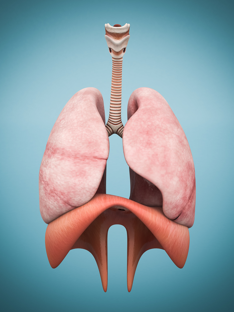 "New ""4-D"" Lung Cancer Model Could Help Therapy Research"