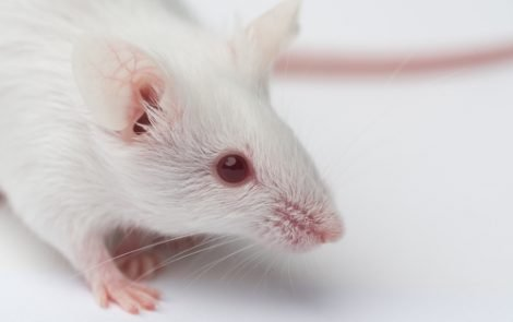 Pharmatest Develops 'Humanized' Mouse Model of Bone Metastasis to Study New Therapies